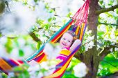 picture of apple orchard  - Child relaxing in hammock - JPG
