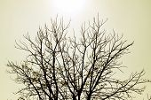 stock photo of drought  - Trees dry winter of Thailand is have the drought - JPG