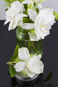 pic of gardenia  - Bouquet of fresh White Gardenias placed in small green mason jar on white or black background as a decoration for a table - JPG