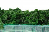 stock photo of kale  - fresh raw green kale packed in plastic box ready to sell isolated over white background - JPG