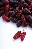 pic of mulberry  - red and purple mulberry fruit isolated on white background - JPG