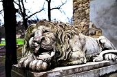 picture of stone sculpture  - Powerfull sculpture of stone lion in Lviv - JPG