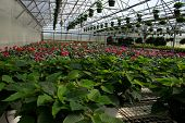 Poinsettias And Fall Plants