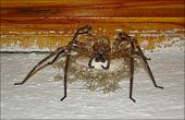 image of baby spider  - Harmless spider from my mountain house wall - JPG