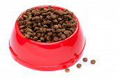 Pet Food In Red Bowl