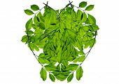 Green leaf love heart frame isolated