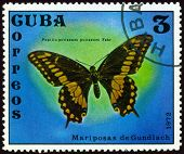 Vintage  Postage Stamp. Papilio Polixenes Polixenes Farb.