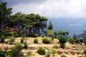 Trees On The Slope Of Mountain. Kemer, Turkey.