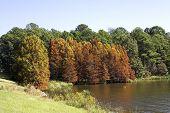 Autumn Landscape 4