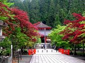 Japanese Temple In Koyo-san  With Colorful Trees