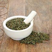 Horsetail leaf herb used in alternative herbal medicine and has anti inflammatory, anti bacterial, d poster