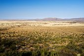 image of open grazing area  - landscape of a dry area in south africa - JPG
