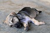 Cute Sleepy Puppy Is Lying On A Pavement On A Street. poster