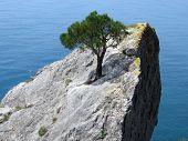 Een boom op de rots