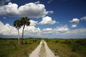Hiking Trail through the Kissimmee Prairie