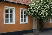 House front with flowers