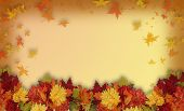 image of fall leaves  - Photoshop composition of colorful fall flowers for Halloween or Thanksgiving frame or border with copy space - JPG