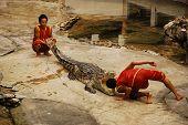The Crocodylidae Or Crocodile Show