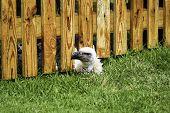 Bird Peeking Under Wooden Fence