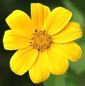 Yellow Flower And Green Spider