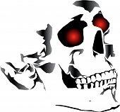 Human Skull2