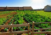View of a rural farm with lettuce and cabbage cultures growing under the sunlight