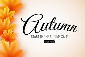 Autumn Sale. Web Banner With Lettering. Seasonal Poster With Autumn Leaves. Maple Leaf. Start Of The poster