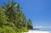 picture of kuramathi  - beautiful white sand beach of Kuramathi island is perfect place to wind - JPG