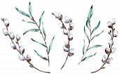 Watercolor Clip-art Of Pussy Willow Branches. Hand-drawn Illustration. poster