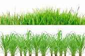 Green Grass Border Isolated On White Background.the Collection Of Grass.(manila Grass)the Grass Is N poster