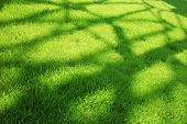Shadow Over Green Grass