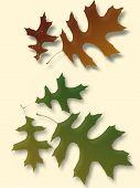 Oak Tree Leaves Silhouette