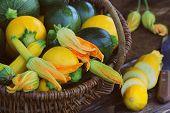 Harvesting Zucchini. Fresh Squash Lying In Basket. Fresh Squash Picked From The Garden. Organic Food poster