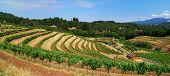Panoramic Vineyard