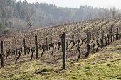 Vineyards, Northern Willamette Valley