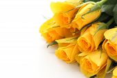 Bouquet Of Yellow Roses On White Background