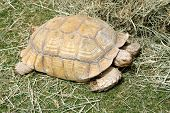 A beautiful Tortoise