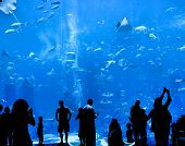 silhouettes of people against a big aquarium