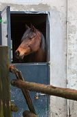 Horse standing in doorway of old barn - Emilia Romagna, Italy