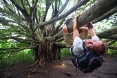 Banyan tree and hiker, Maui, Hawaii. Man hiking climbing giant Hawaiian Banyan tree on the Pipiwai Trail to Waimoku Falls around Haleakala National Park, Hawaii, Maui, USA