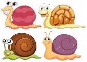 stock photo of terrestrial animal  - Illustration of the four snails with different shells on a white background - JPG