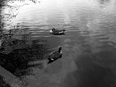 Ilford Lake 12
