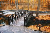 Autumn landscape. Bridge in park. Composition of nature.