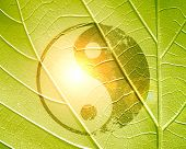foto of karma  - yin yang sign on a natural green background - JPG