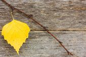 Branch With Yellow Leaf On The Wooden Background