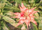 picture of bromeliad  - Grunge background with bromeliad flower on brick wall transparent - JPG
