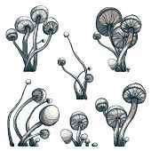 stock photo of toadstools  - Vector EPS8 illustration - JPG