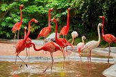 stock photo of pink flamingos  - Pink flamingos at the zoo in Shanghai - JPG