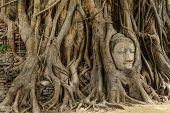 Buddha head in old tree