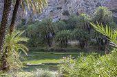 Preveli, palm grove